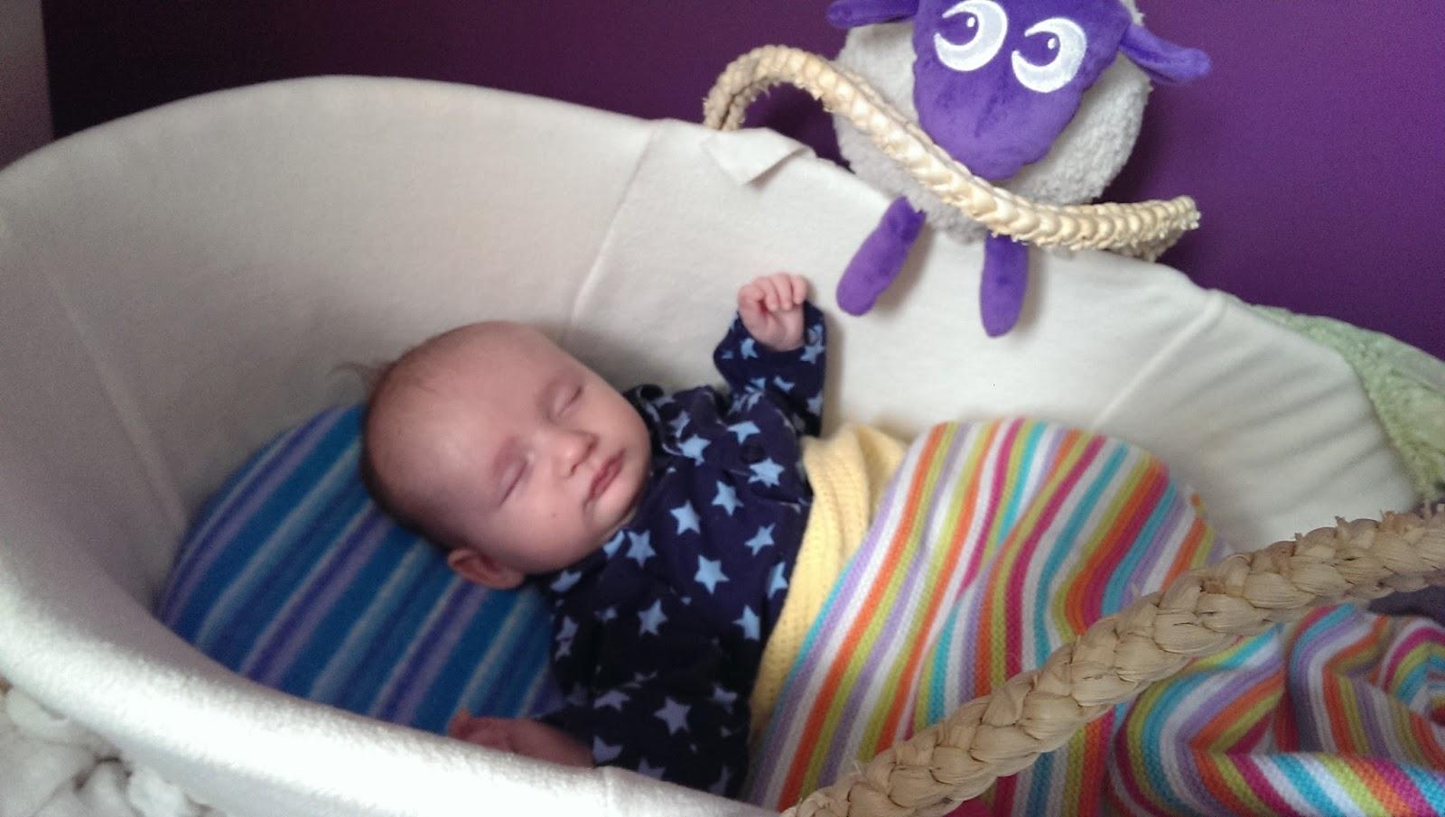 Squidge sleeping in his moses basket