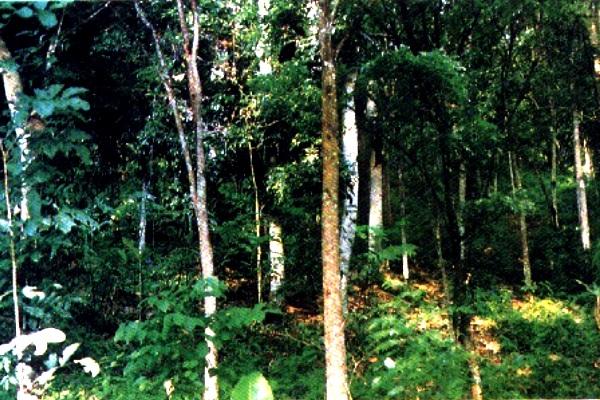 Hutan. Kotabumi Lampung Utara