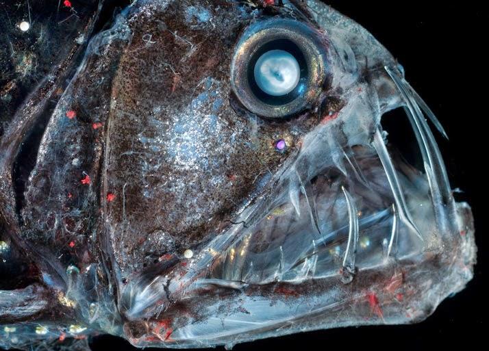 hewan aneh di laut