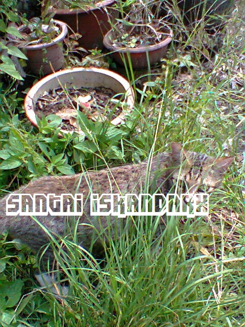 iskandarx.blogspot.com,Santai iskandarX,Faizal