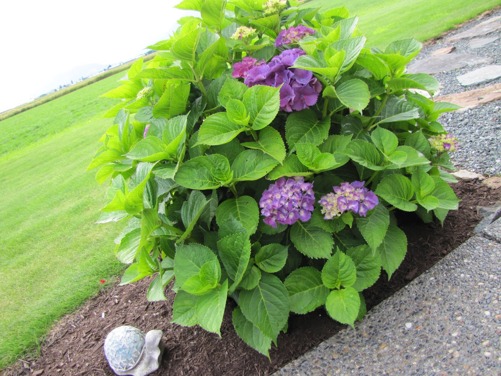 My front porch the hunt for hydrangeas my front porch the hunt for hydrangeas izmirmasajfo