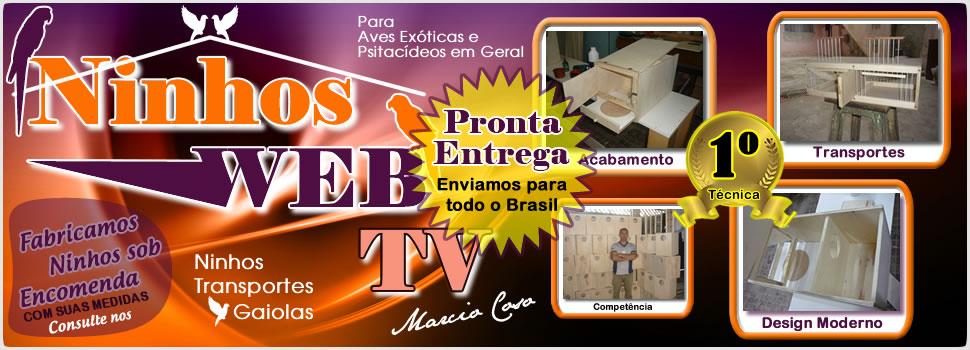 Ninhos WEB-TV