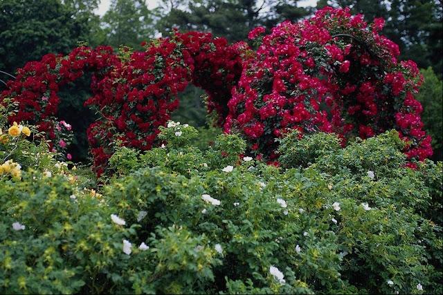 நான் பார்த்து ரசித்த புகைப்படங்கள் சில.... Beautiful+Flower+Garden+Wallpapers+%252813%2529