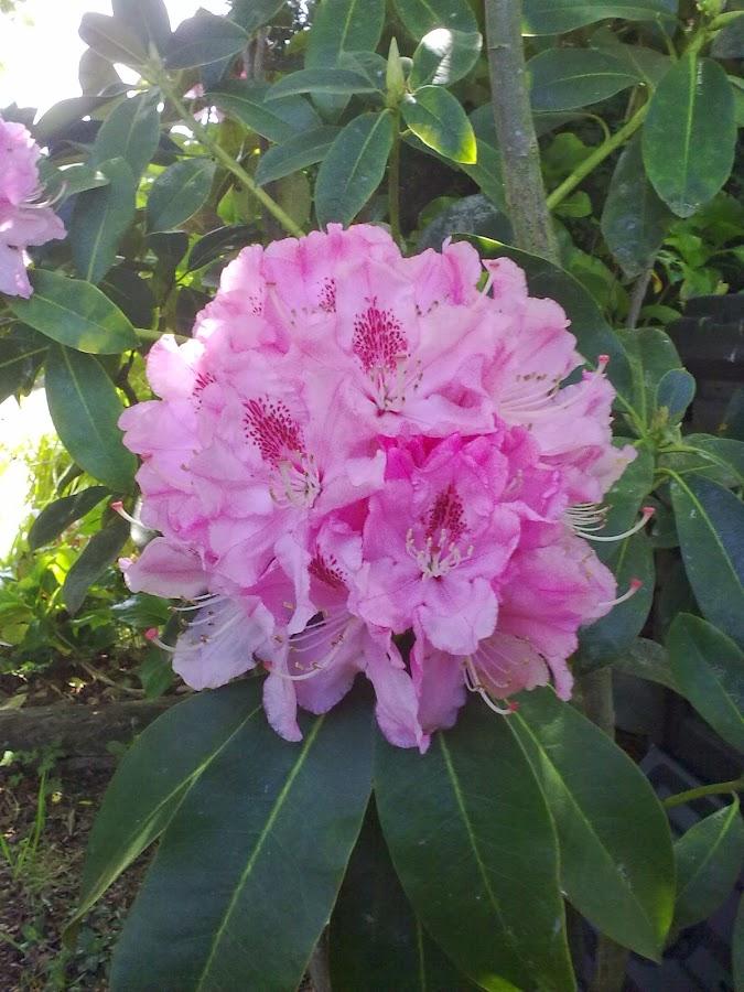 Manualidades jardin for Como hacer mi jardin