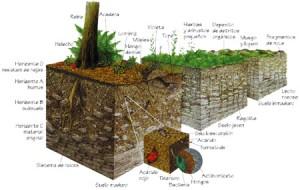 Geolog a meteorizaci n de rocas y formaci n de suelos for Proceso de formacion del suelo