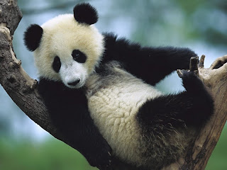 ملف كامل عن اجمل واروع الصور للحيوانات  المفترسة   حيوانات الغابة  33