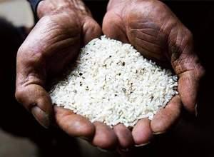 [Image: Cadmium-Rice.jpg]