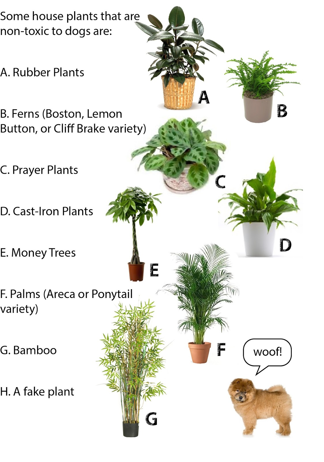 jess the miscellaneous july 2015 ForDog Safe Houseplants