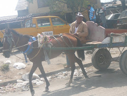 Mule Cart has right of way, streets of Barranquilla