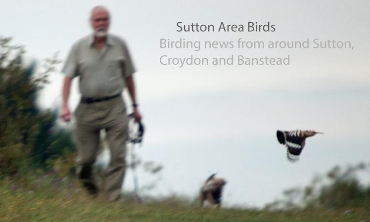 Sutton Birding