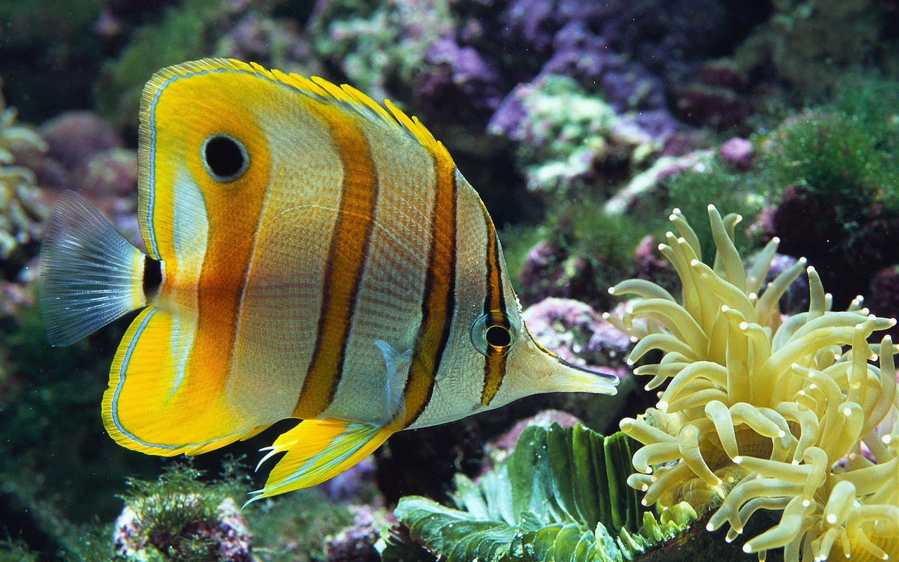 Desktop wallpapers animals wallpapers flowers wallpapers for Are fish animals