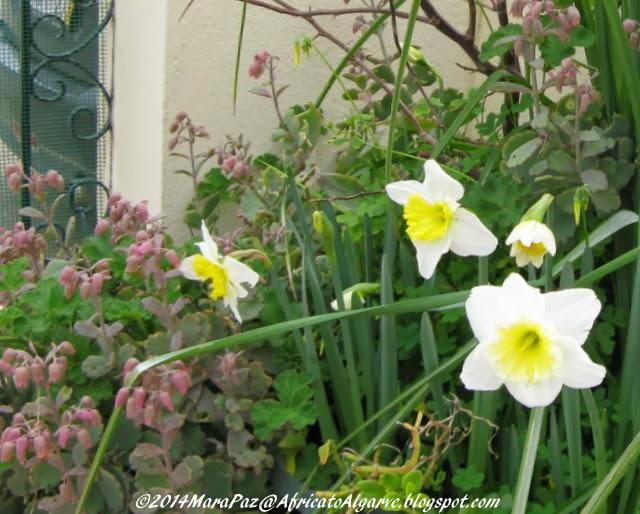 Daffodils, etc.