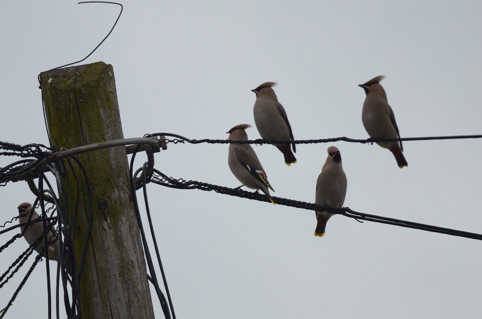 Drimnagh Birdwatch