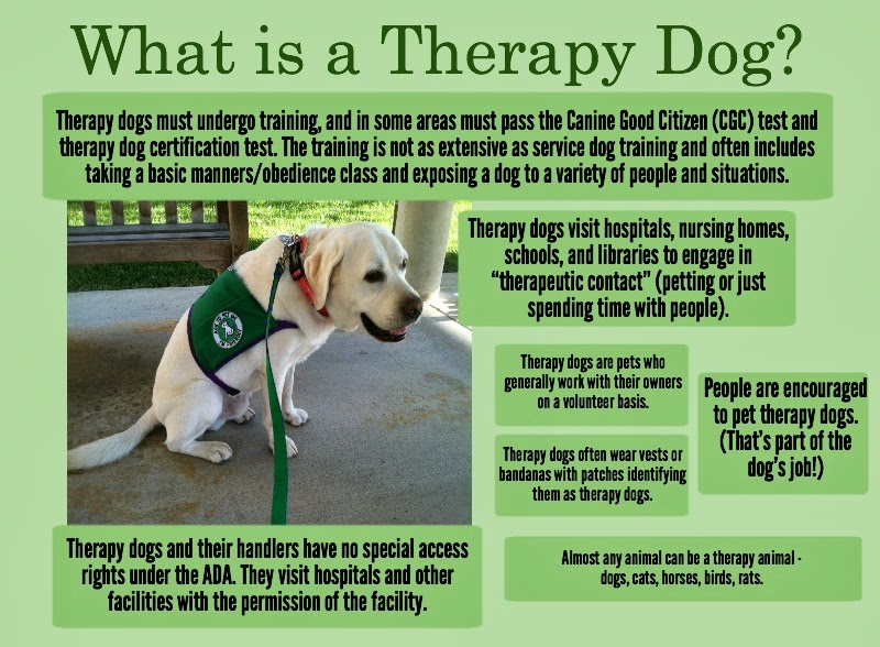 Therapy Dog Training Certification Uk