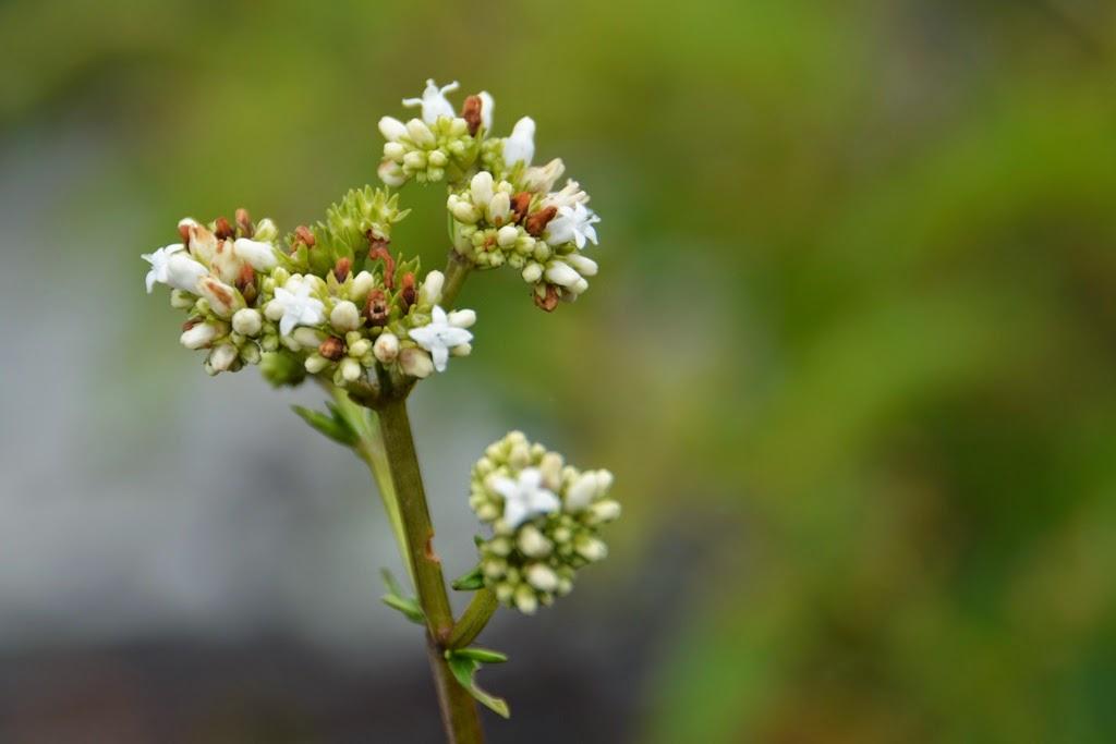 Waynapicchu plants