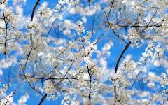 Spring arrived!!!