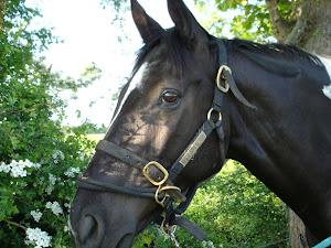 Merlin, my horse