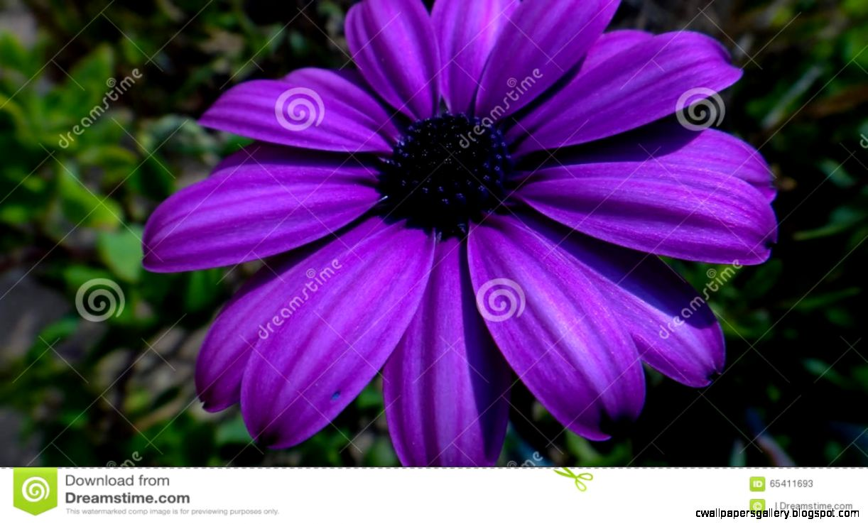 Purple Flowers Images And Names   Flowers Ideas