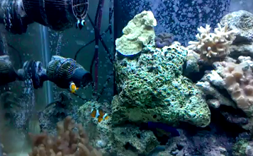 aquarium saltwater maintenance