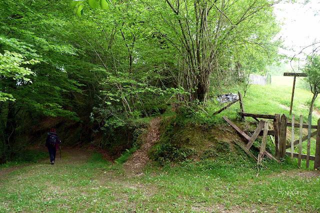 Collada Llombecina - Bosque de Cea