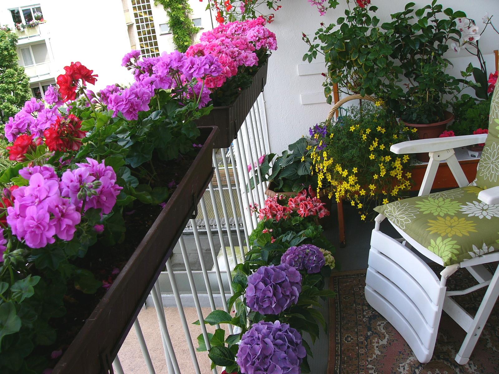 Elegant Als U201eGroßstadtpflanzeu201c, Ohne Möglichkeit Sich In Einem Garten Zu Betätigen,  Ist Doch Ein Balkon Ein Geschenk. Dieses Geschenk Habe Ich, Vor 23 Jahren,  ...