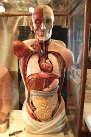 merupakan salah satu sistem pengeluaran yang terjadi pada badan insan Sistem Ekskresi Pada Manusia