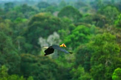 Mencoba Ekowisata di Hutan Gambut Bukit Batu Riau