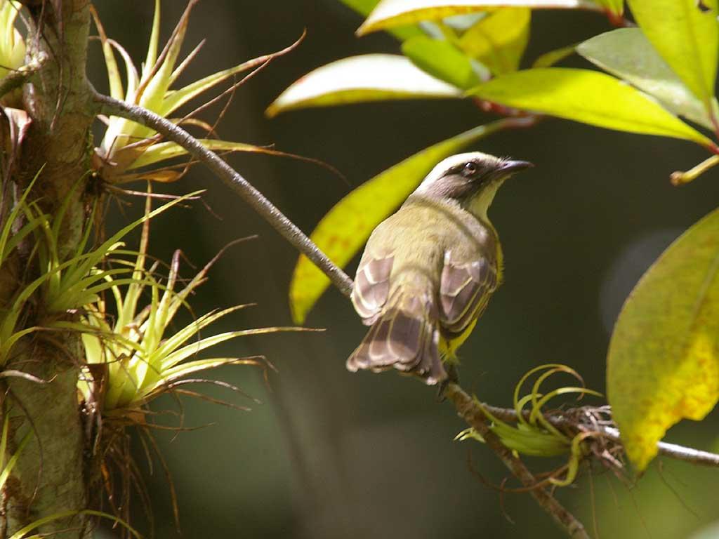 Beautiful Birds Wallpapers (3)