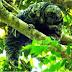 Pesquisadores podem ter descoberto nova espécie de macaco em Mato Grosso