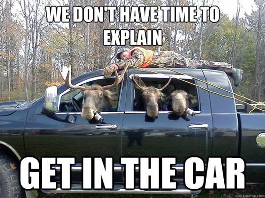 funny-moose-get-in-the-car.jpg