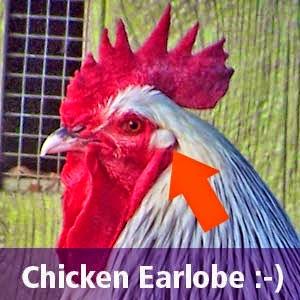 ear+lobe.jpg