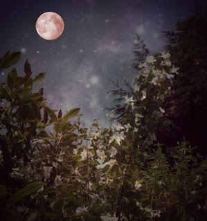 lunar eclipse tarot spread and journaling sheet