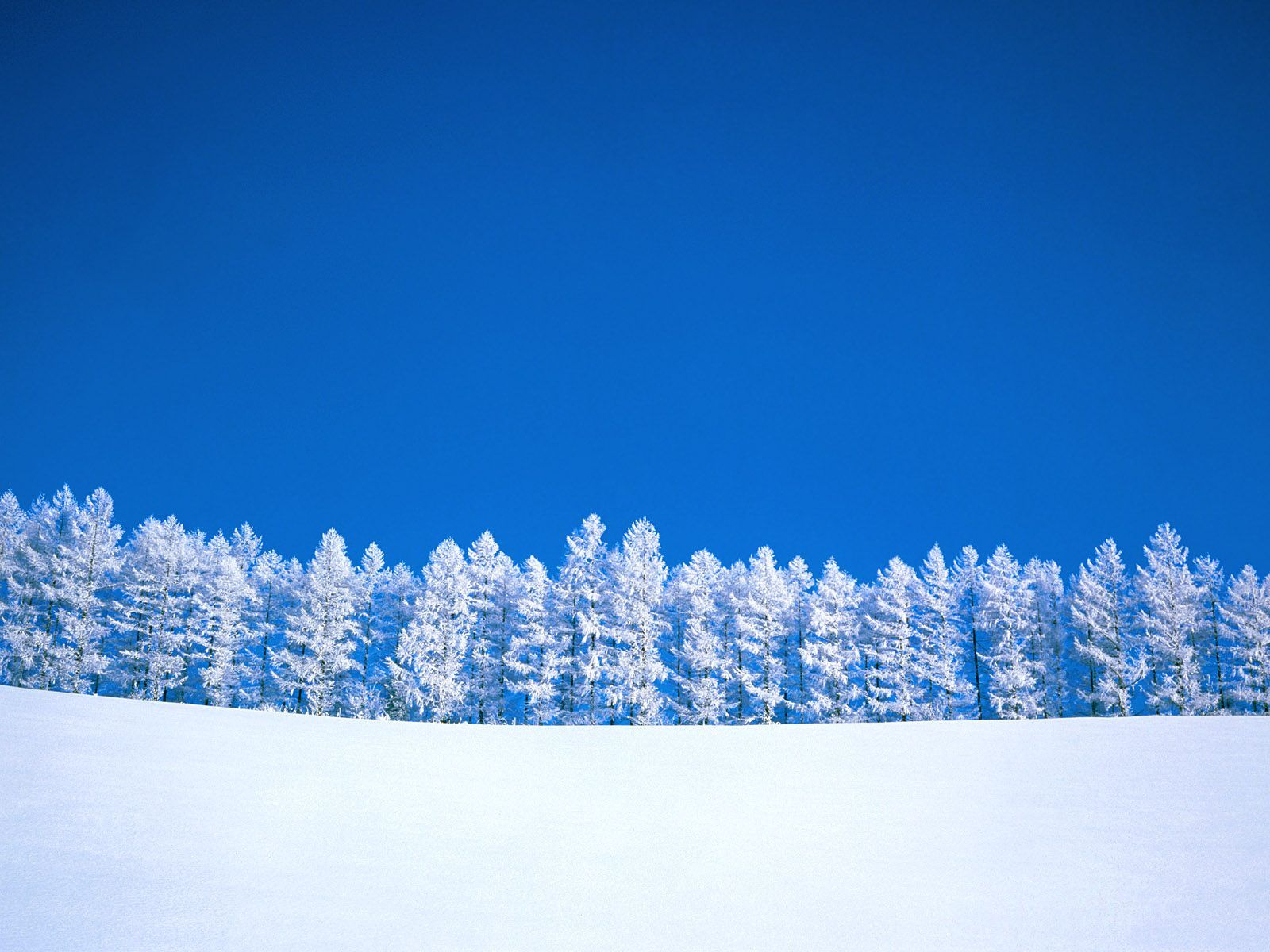 Beautiful Winter Snow Full HD Nature Background Wallpaper for Laptop ...