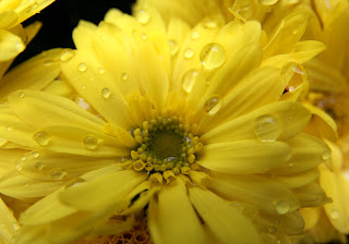 Amarelo.jpg (900×630)