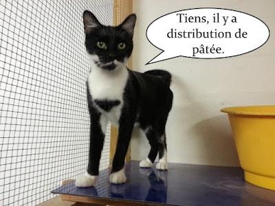 Petit chat noir et blanc.
