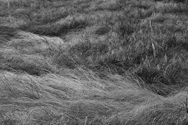 Grassland black and white photography