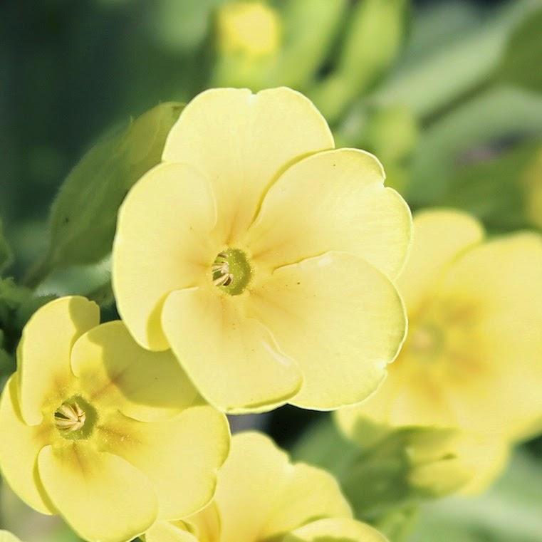 http://www.newhousenewhomenewlife.com/2015/04/5-favorite-spring-perennials.html