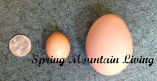 farm fresh egg sizes