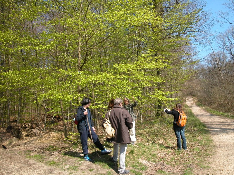 Favori Les Petites Herbes: fleurs, arbres et arbustes rencontrés lors de  KQ73
