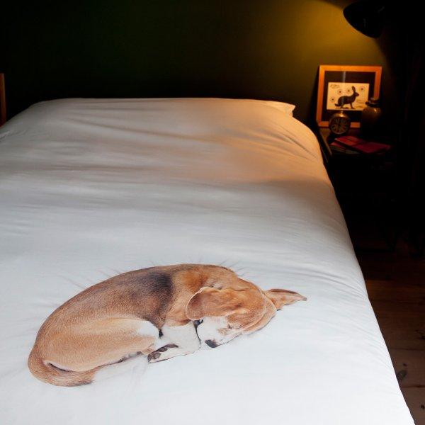 Dog Bedding For Winter Straw Vs Hay