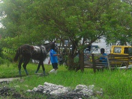Practical Gardening Hauling Horse Manure Organic Fertilizer