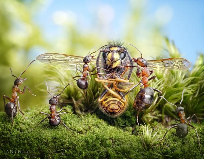 Imagem de Formigas  besouro