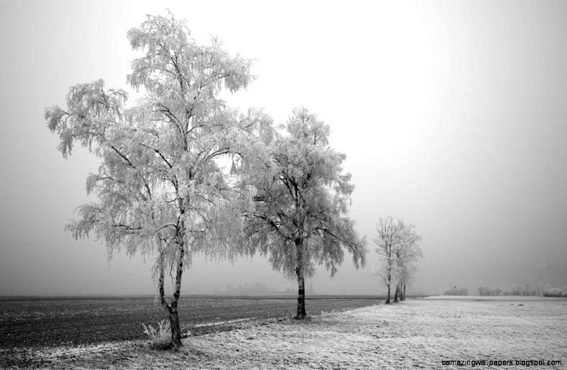 Black And White Nature – BUZZERG