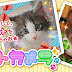 Petcamera: Puricute para Pets!