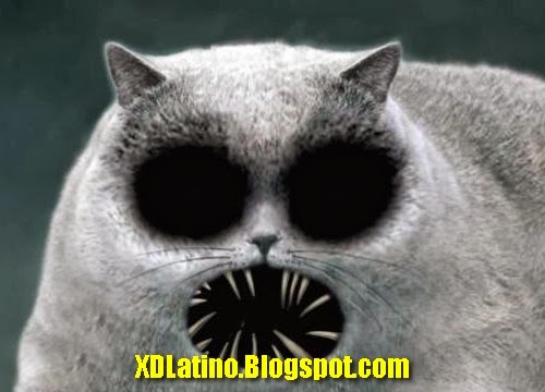 los gatos latino personals Los angeles westside today  los gatos los gatos weekly-times  san diego el latino san diego.