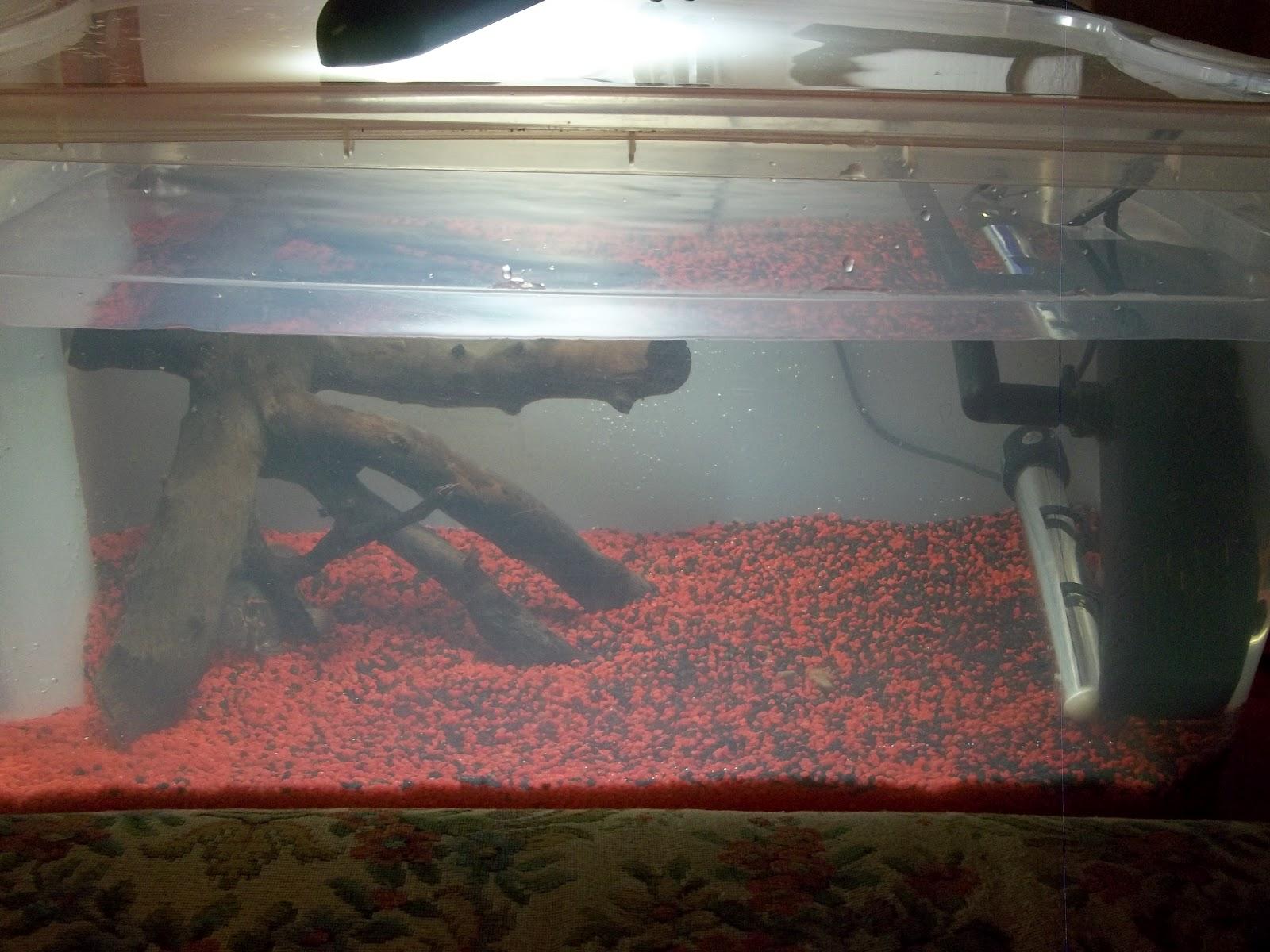 Athropos zootropicana for Acquario esterno per tartarughe