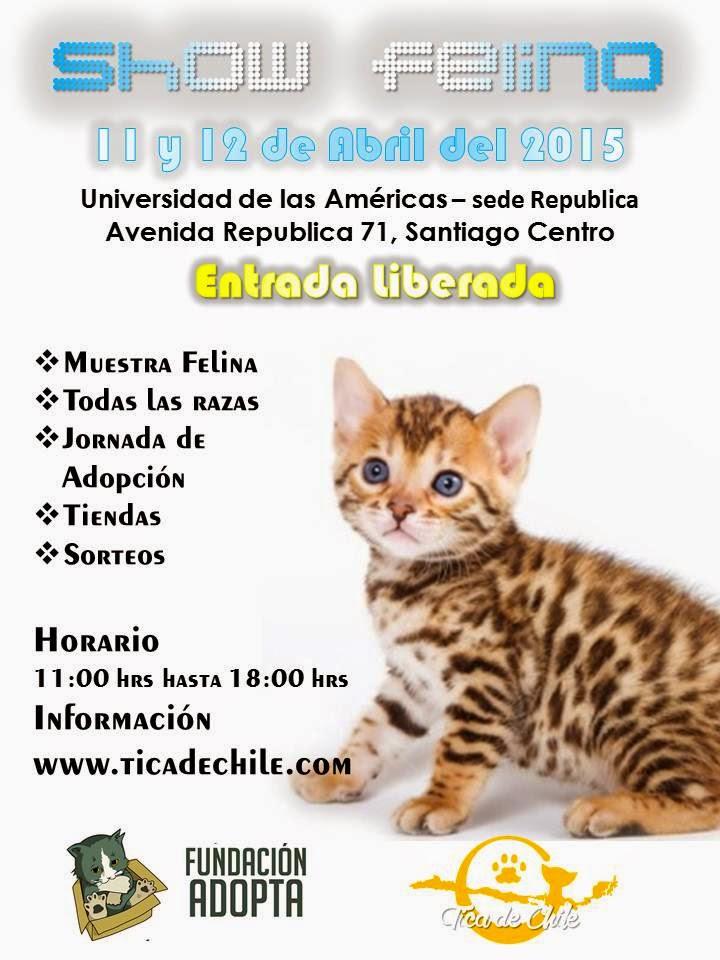 Show Felino
