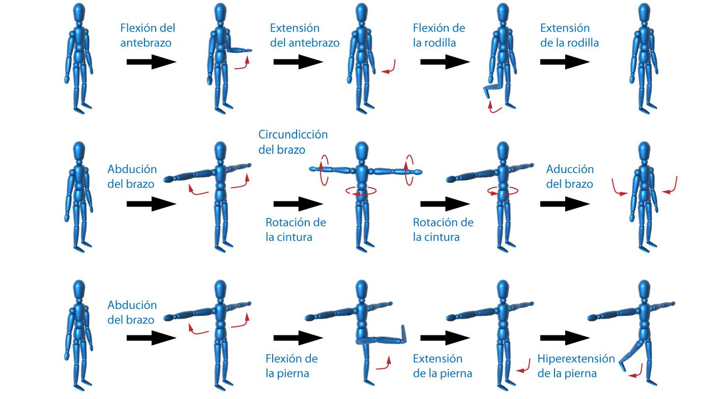 el moderno prometeo: Zonas corporales y tipos de movimientos musculares
