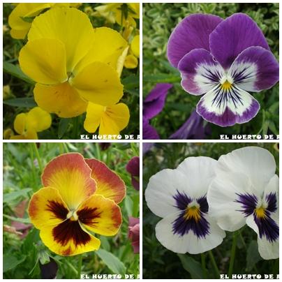 el huerto de ram n flores de plantas ornamentales