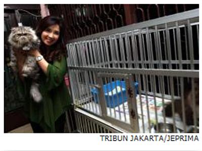 Istri Roy Suryo Punya 50 Ekor Kucing Persia